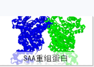 血清淀粉样蛋白A抗原,SAA抗原,Serum amyloid A protein
